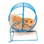 Par manque de recul, le hamster Charlie est peut-être persuadé, de là où il regarde, de faire œuvre utile ... :-)